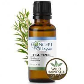 Wild Harvested Tea Tree Essential Oil